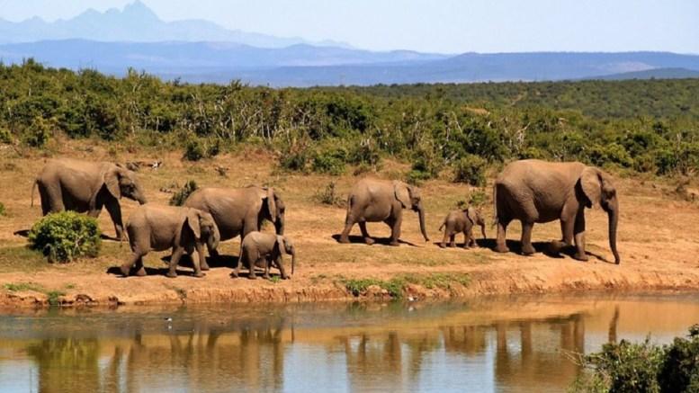 Botswana éléphants