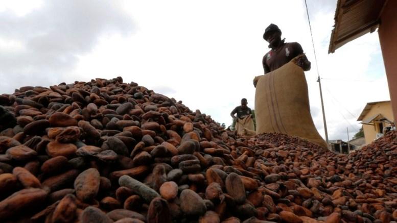 cacao cote d'ivoire