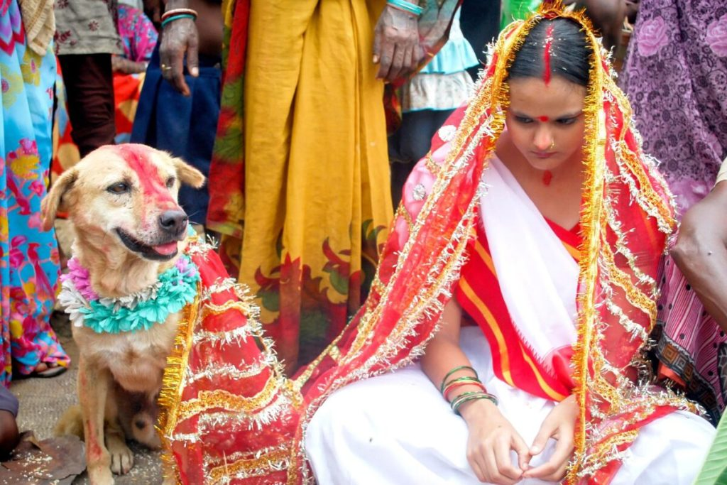inde mariage d'enfants chien