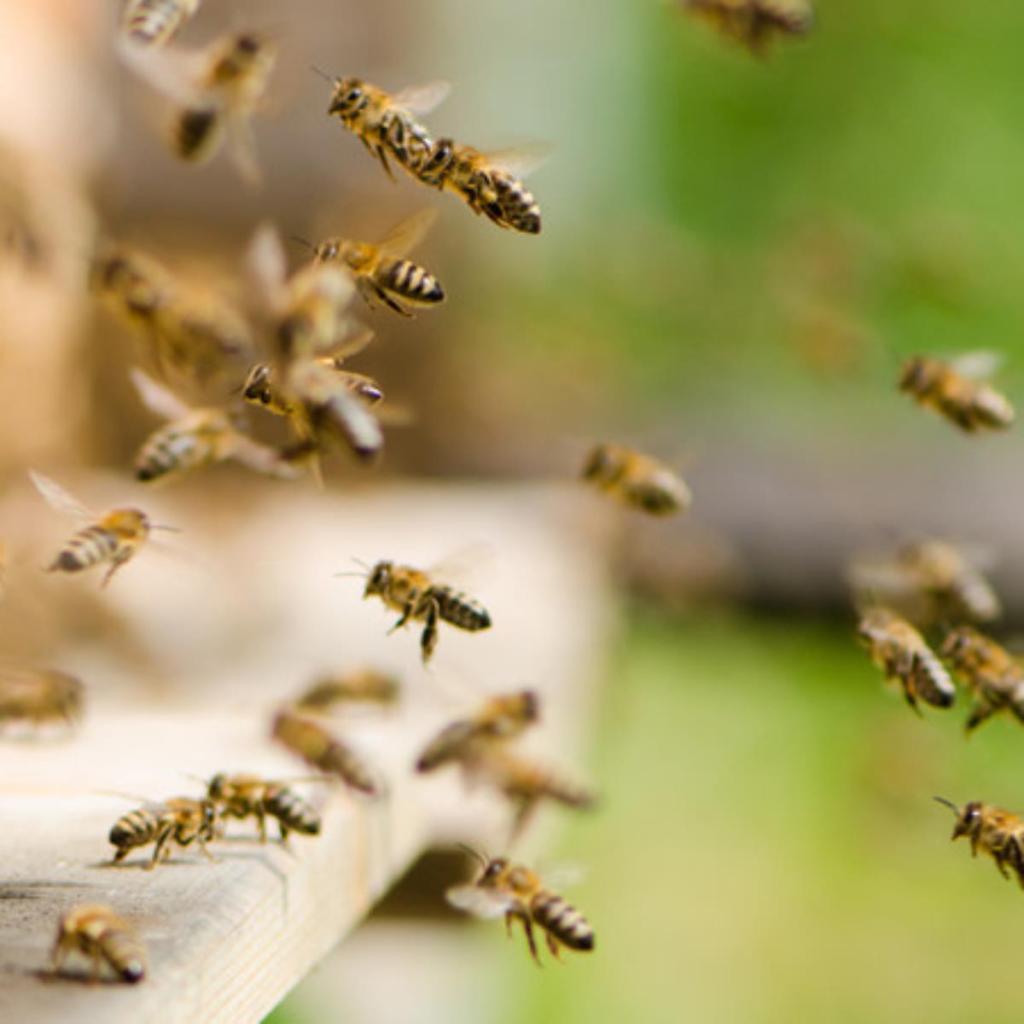 Kenya voleurs abeilles rendre