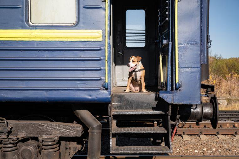 Escaped dog takes the train to Utrecht Central Station on its own