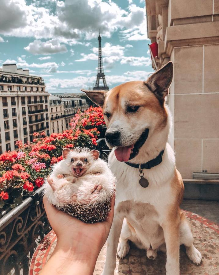 The world's most famous hedgehog (3)