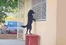 Dog trace its owner to school, peek and wait til ended [Photos]