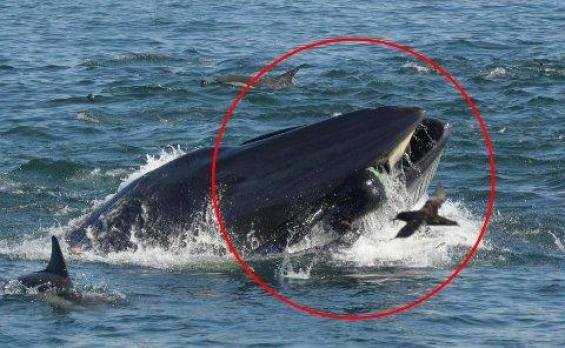 """Diver swallowed and spat out by a whale: """"There was no time for fear"""""""