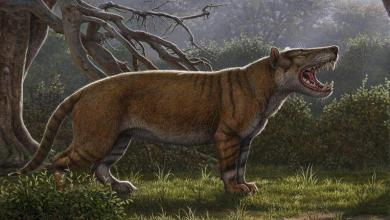 Scientists are discovering one of the largest carnivorous mammals ever