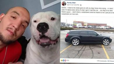 """Man sells car to pay for expensive dog surgery: """"Losing him was not an option"""""""