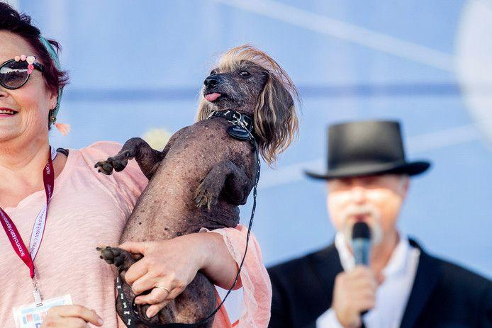 Scamp the Tramp is officially the ugliest dog in the world