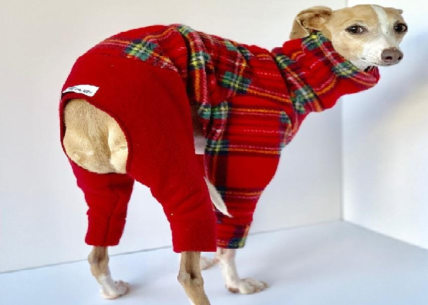Sighthound Margaret is a popular 'supermodel' for four-legged fashion