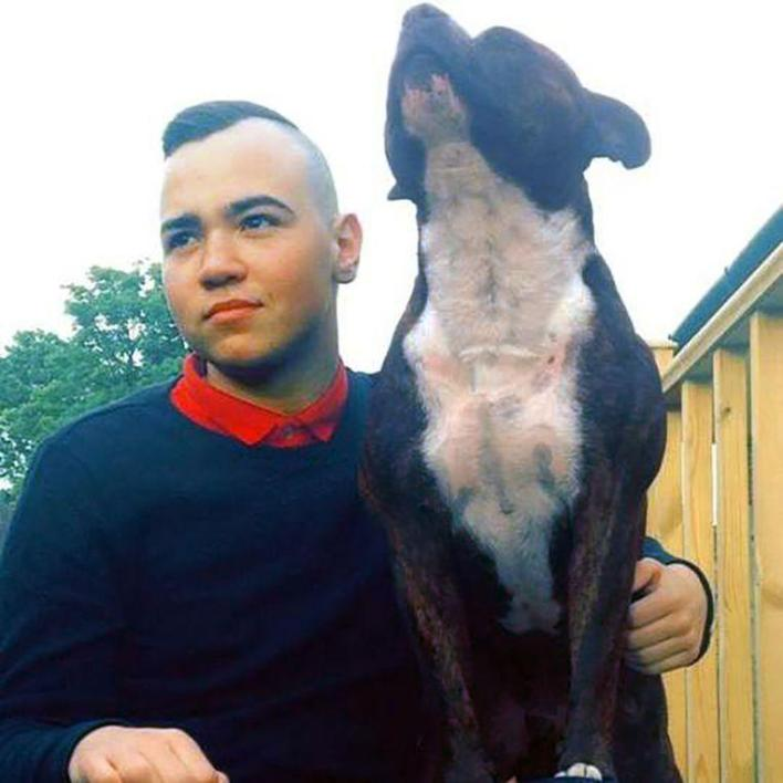 Faithful dog dies 15 minutes after the owner (25) dies of cancer