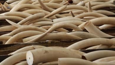 Two tons of ivory and scales from Nigeria seized in Vietnam