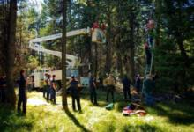 70-year-old dangles upside down in a tree for two days