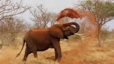 Conservationists receive 16.9 million for ambitious project in southern Africa
