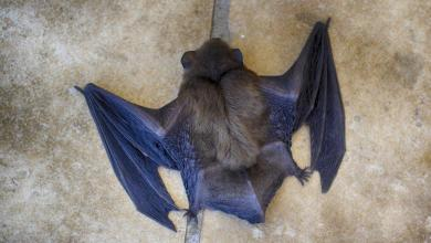 2 years ago, US diplomats warned risky research on bats in a lab in Wuhan
