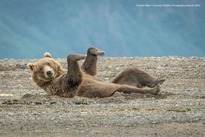 This bear shouldn't take quarantine into account in Alaska, but that doesn't detract from the fact that exercise remains important.
