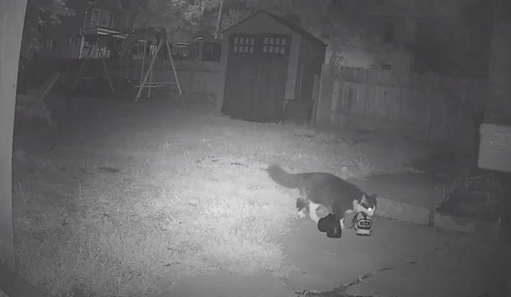 A camera in the backyard catches Jordan red-handed