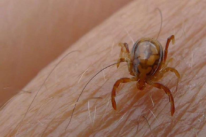 First case of Crimean-Congo fever in Mauritania