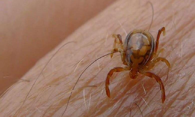 First case of Crimean-Congo fever in Mauritania