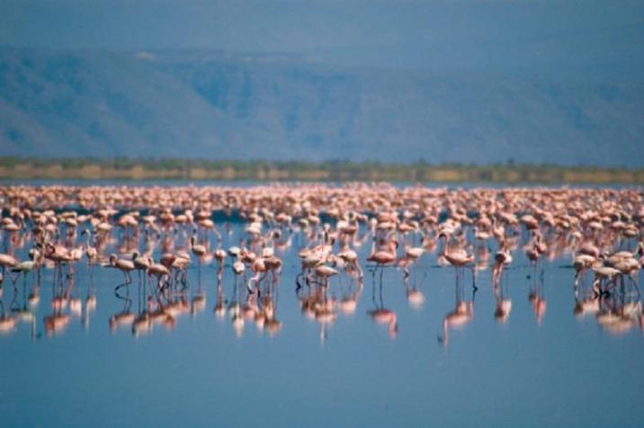 Lake Natron (soda lake in Arusha Region, Tanzania)