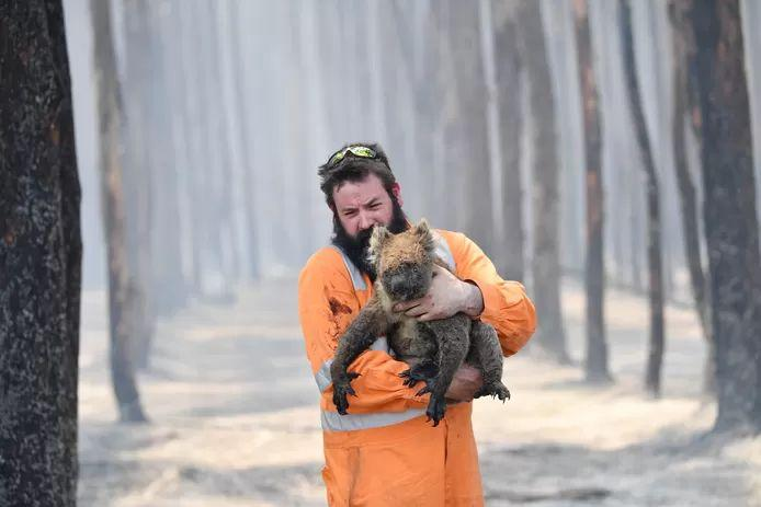 Over 60,000 koalas hit by Australian bushfires last summer