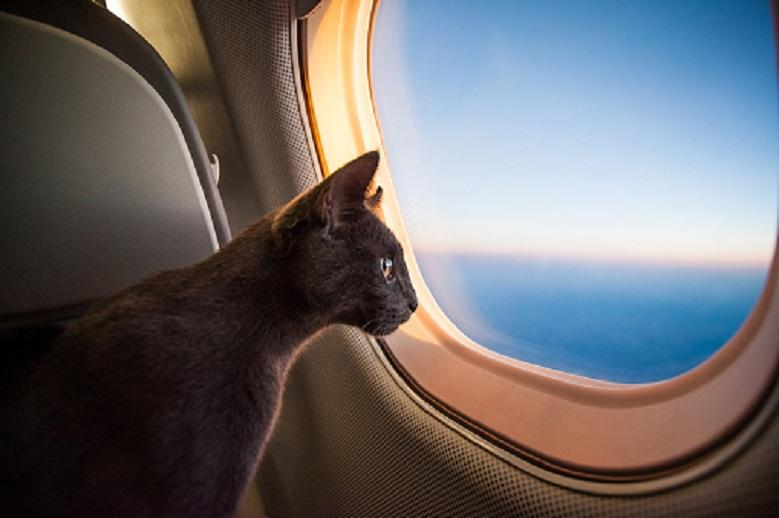 Sudanese plane returns to airport because of a cat
