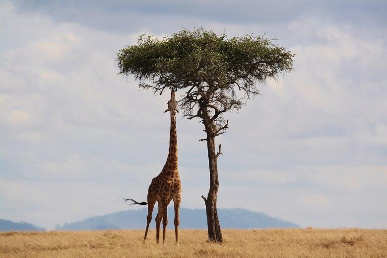 What is Kenya known for? Ten reasons to visit Kenya