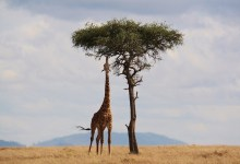 What is Kenya known for? Ten reasons to visit Kenya