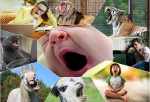 Have you ever wondered why we yawn? Throughout life, so many interesting physiological processes take place in the human body