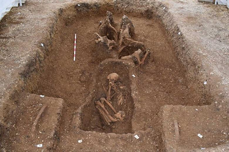 Secret of the ancient chariot buried with horses and a rider