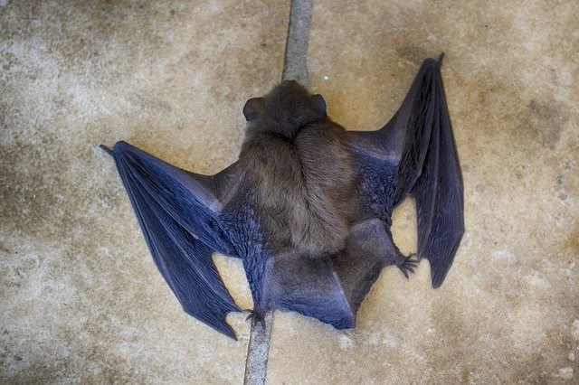 """A new """"similar"""" to SARS-CoV-2 discovered in bats in England"""