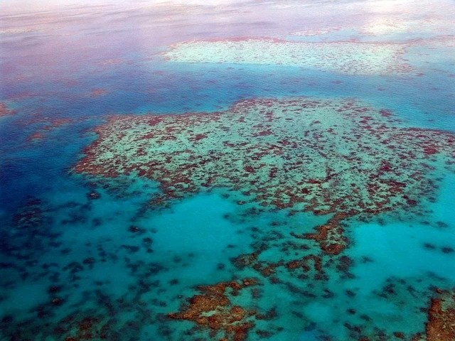after all Great Barrier Reef is not on the list of endangered heritage