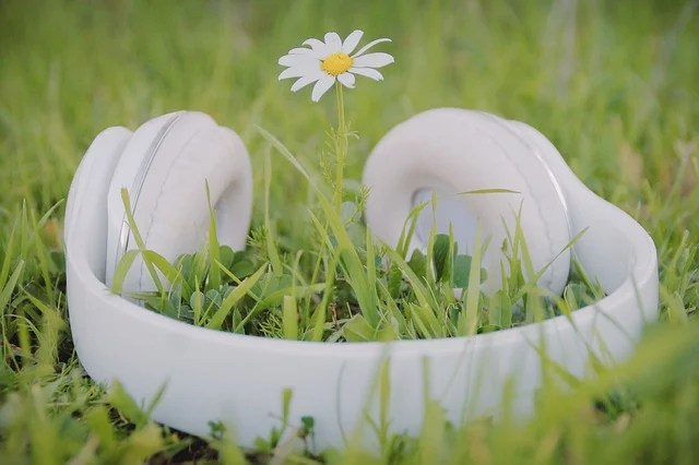 Listening to the song of plants? It's possible via innovative device