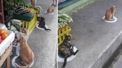 Cats set a good example: this is how you do social distancing