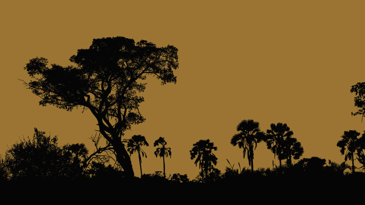 Kama Sywor Kamanda – Est-il une musique plus douce ?