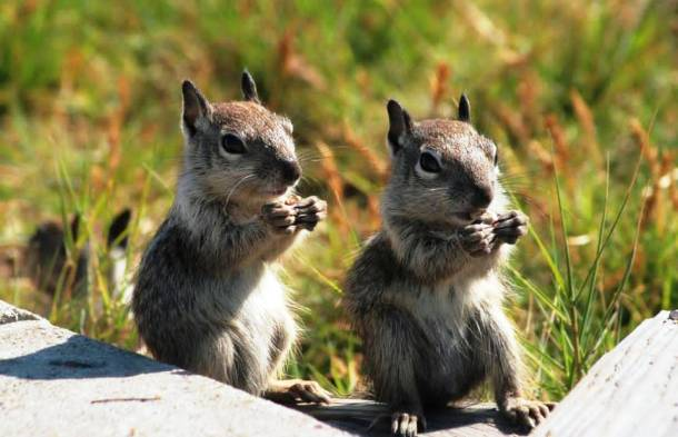 Les écureuils 20 des animaux les plus intelligents au monde