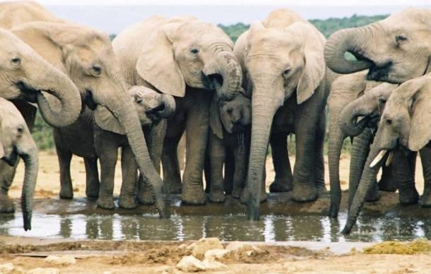 Les éléphants 20 des animaux les plus intelligents au monde