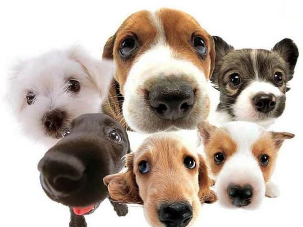 Les chiens 20 des animaux les plus intelligents au monde