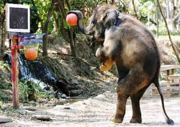 elephant trompe levee elphant faisant jaillir de lueau de sa trompe coloriage petite statue. Black Bedroom Furniture Sets. Home Design Ideas