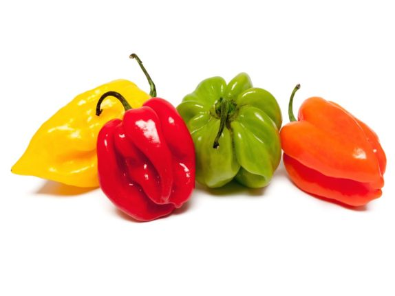 Piment habanero HD