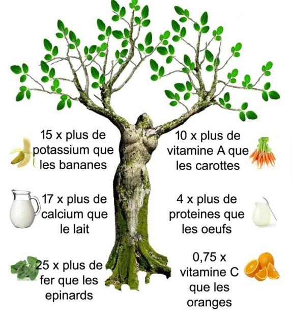 moringa arbre-vie