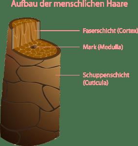 Aufbau_Haar