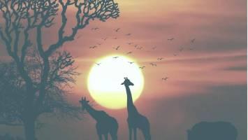 Shona SA - African Heritage (Original Mix)