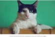 Pet Cat Test positive for coronavirus in UK