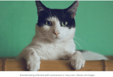 Pet cat becomes first animal in UK to test positive for coronavirus
