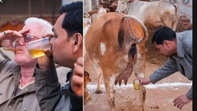 Photo of I drink cow urine everyday – Popular Bollywood actor Akshay Kumar