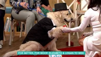 Photo of Woman marries her dog after giving up on men