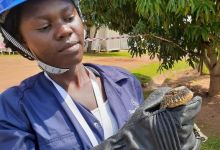 Photo of Meet Olive Akello the Ugandan snake girl