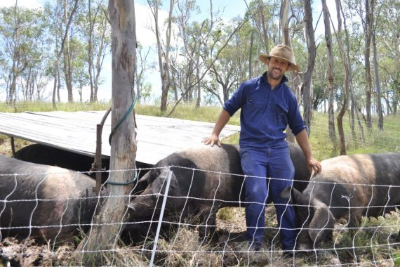 Rohan and his Wessex Saddleback pigs
