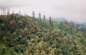 environmental-nonprofit-19