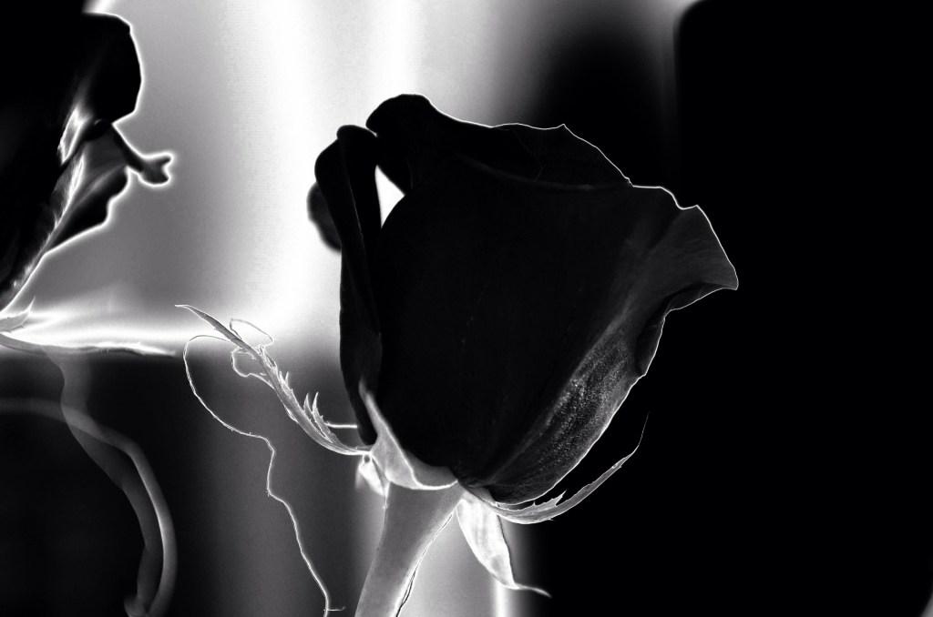 The Soul is like a flower