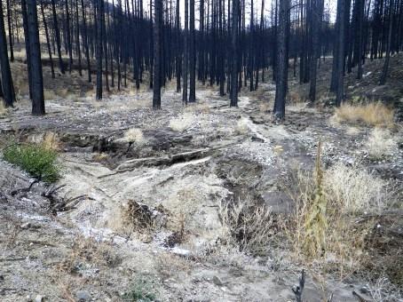Upper Squaw Creek erosion